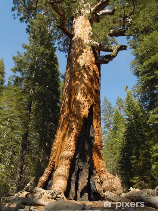 Naklejka Pixerstick Yosemite: grizzly gigant - Ameryka