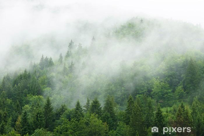 Vinyl Fotobehang Mistige bos - Landschappen