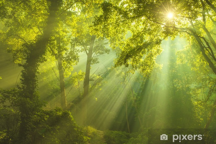 Zelfklevend Fotobehang Bosrijke omgeving - iStaging