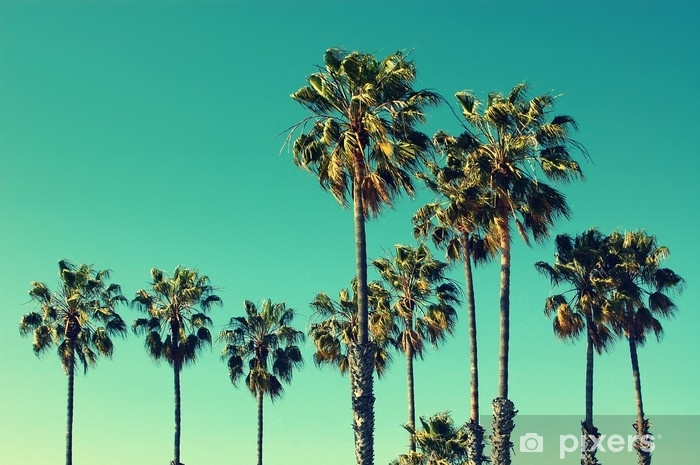 Palm trees at Santa Monica beach. Vintage post processed. Fashion, travel, summer, vacation and tropical beach concept. Pixerstick Sticker - Travel