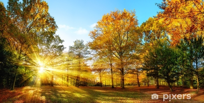 Vinyl Fotobehang Idyllischer naturpark im herbst bei sonnenschein - Landschappen