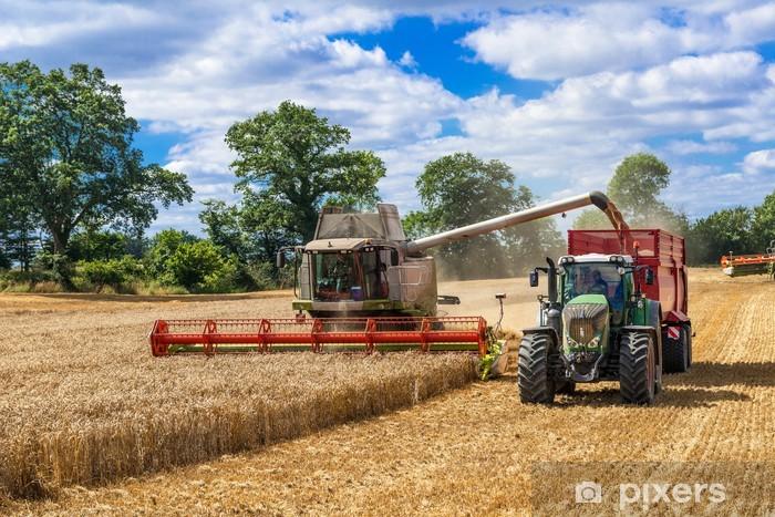 Fotomural Estándar Mähdrescher und mit Traktor Ladewagen bei der Getreideernte - 2899 - Agricultura