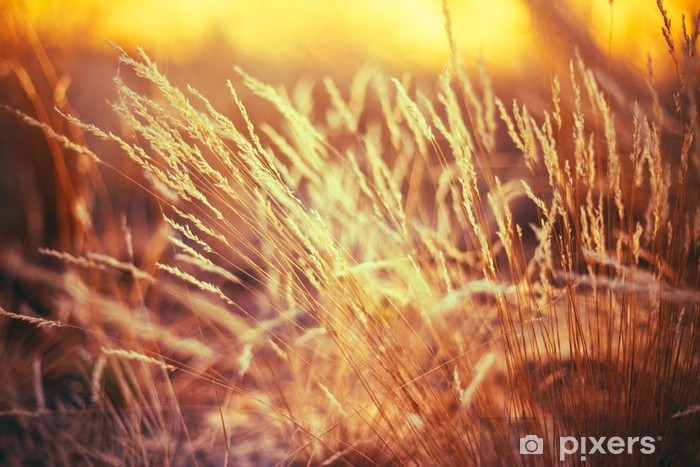 Vinyl-Fototapete Natur tonte Gras Hintergrund der trockenen Gras - Pflanzen