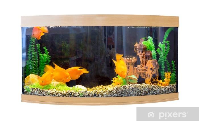 Fototapeta winylowa Piękne półokrągłe akwarium z tropikalnymi rybami - Zwierzęta żyjące pod wodą