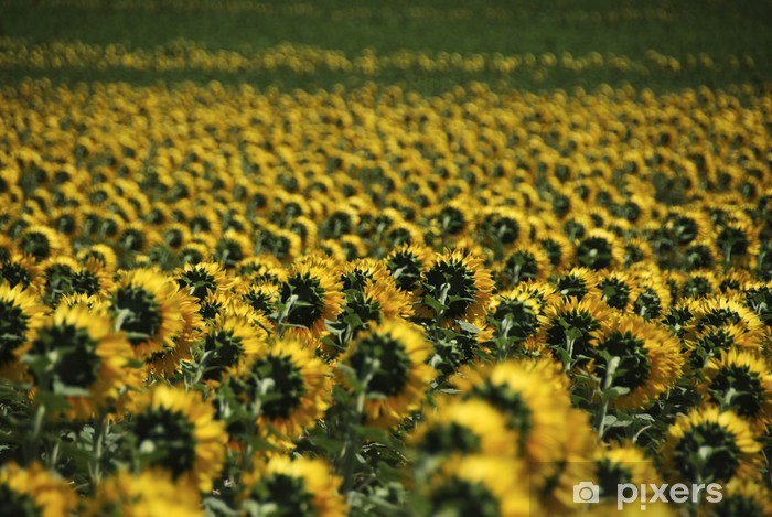 Fototapeta winylowa Tapeta - Kwiaty