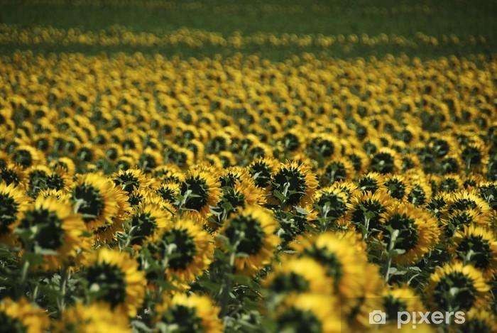 Naklejka Pixerstick Tapeta - Kwiaty