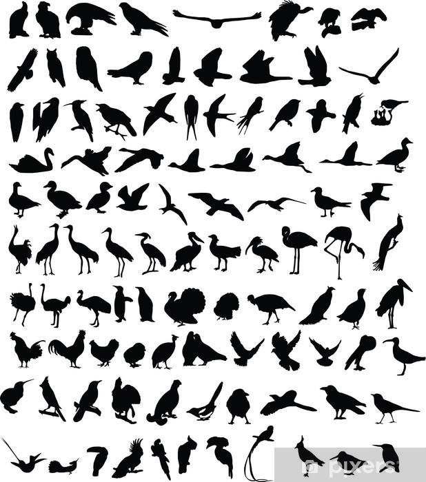 Fototapeta winylowa Sto sylwetek ptaków - Ptaki