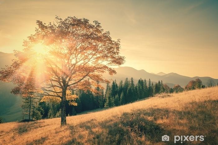 Fototapeta winylowa Jesień drzewo i sunbeam ciepły dzień krajobraz tonie w vintage - Krajobrazy