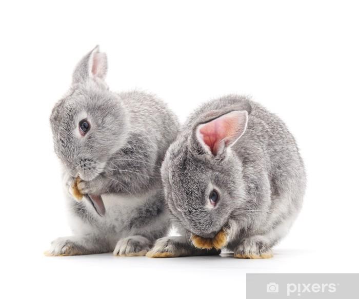 Pixerstick Sticker Baby-konijnen. - Zoogdieren
