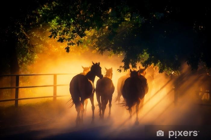 Afwasbaar Fotobehang Kudde paarden - Dieren