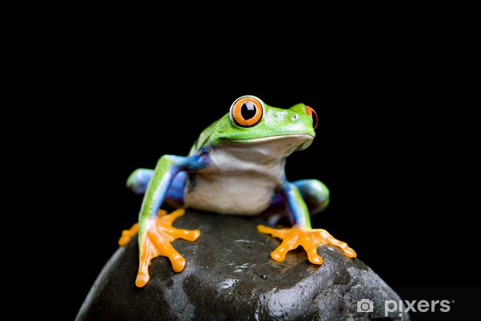 frog on a rock closeup and isolated on black Pixerstick Sticker - Other Other