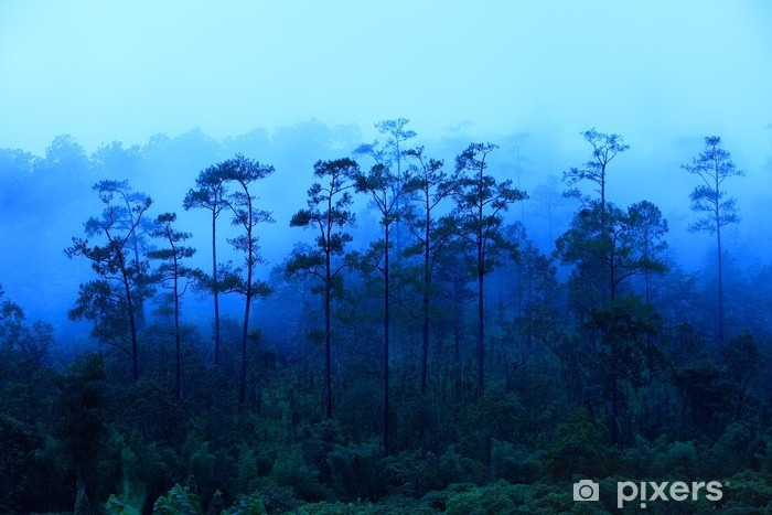 Pixerstick Aufkleber Nord-Thailand Regenwald im Nebel vor Sonnenaufgang - Landschaften