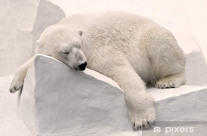 Sticker Pixerstick Polar sommeil de l'ours. - Thèmes