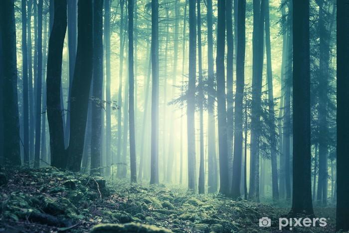 Fotomural Estándar Mágico verde azul saturado árboles bosque brumoso paisaje. efecto de filtro de color utilizado. La imagen fue tomada en el sureste de Eslovenia, Europa. - Otoño