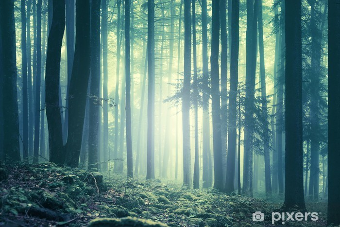 Magical blue green saturated foggy forest trees landscape. Color filter effect used. Picture was taken in south east Slovenia, Europe. Self-Adhesive Wall Mural - Autumn