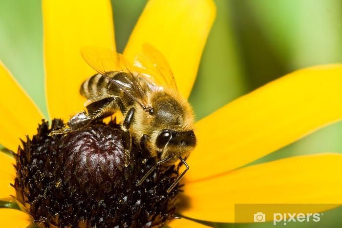 Vinyl-Fototapete Nahaufnahme einer Honigbiene auf einer Blume - Andere Andere