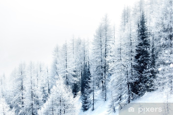 Snow covered forest Vinyl Wall Mural - Criteo