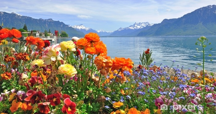 Fotomural Estándar Flores de primavera en flor - Plantas y flores