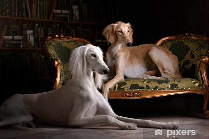 two greyhound saluki dog in Royal interior Pixerstick Sticker - Mammals