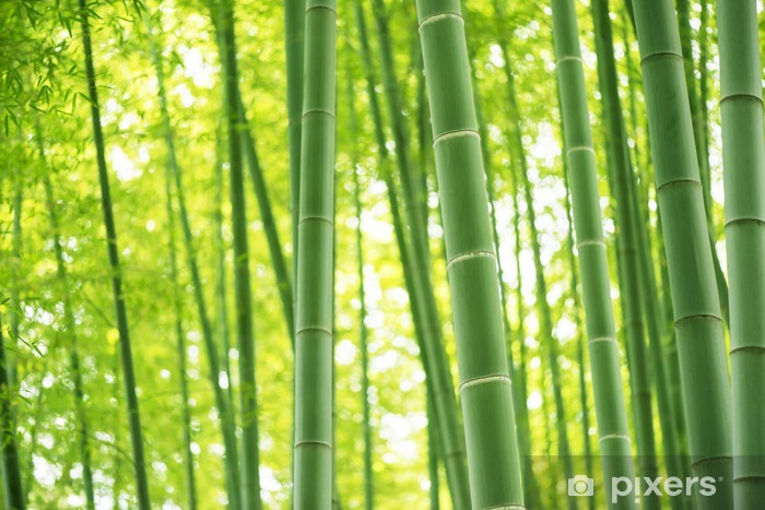 bamboo forest Washable Wall Mural - Plants