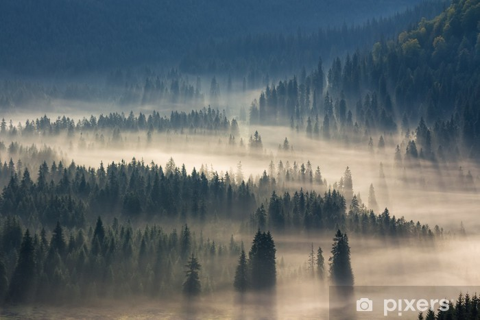 fir trees on a meadow down the will to coniferous forest in foggy mountains Vinyl Wall Mural - Autumn