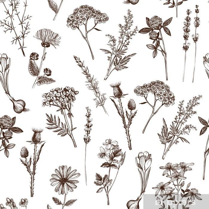 Vektor sømløs mønster med blæk hånd trukket medicinske urter skitse Vinyl fototapet - Planter og Blomster
