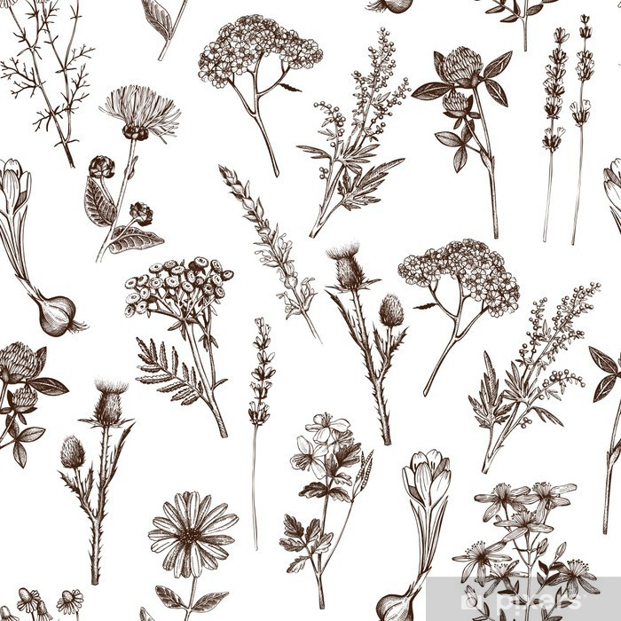 vector seamless pattern with ink hand drawn medicinal herbs sketch Vinyl Wall Mural - Plants and Flowers