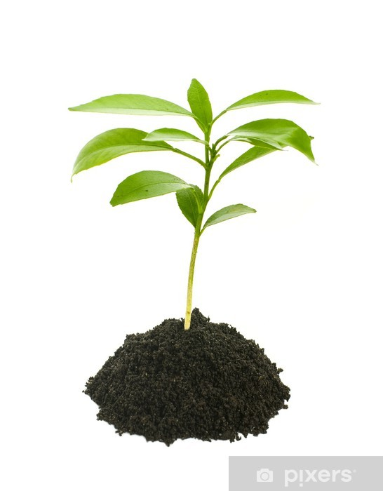 sticker jeune plante verte isol e sur blanc pixers. Black Bedroom Furniture Sets. Home Design Ideas