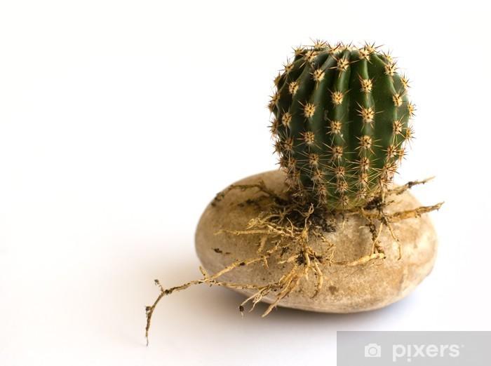 Papier Peint Petit Cactus Ronde Avec Des Racines Sur Une Pierre