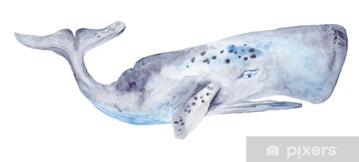 Watercolor Whale Painting Vinyl Wall Mural - iStaging