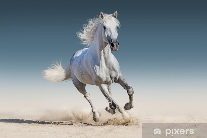 Pixerstick Dekor Vit häst springa galopp - Djur