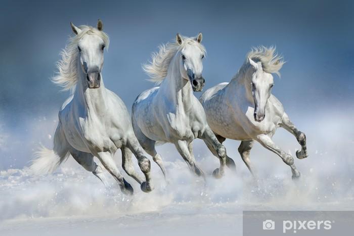Fototapet av Vinyl Tre vit häst köra galopp i snön - Däggdjur