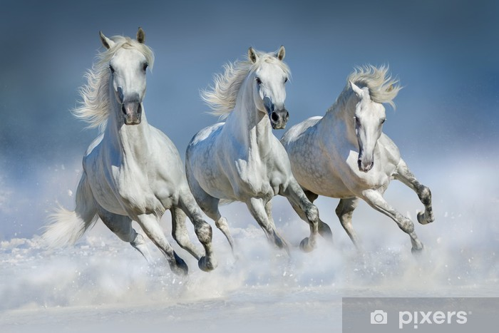 Papier peint vinyle Chevaux blancs galopant dans la neige - Mammifères