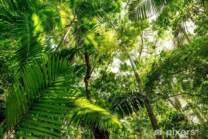 Amazonas regnskov, Brasilien Vinyl fototapet - Amerika