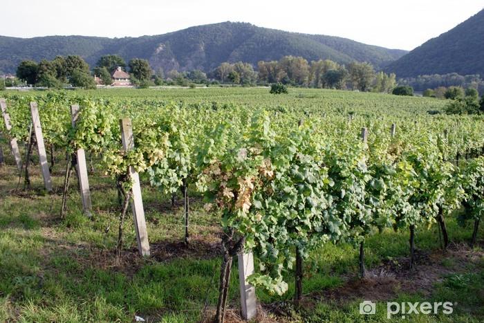 Naklejka Pixerstick Winnica - Krajobraz wiejski