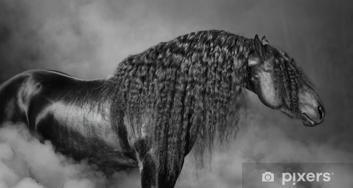 Vinyl Fotobehang Portrait of black Frisian horse with long mane in the smoke -