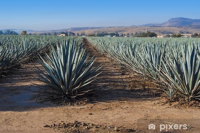 Fototapeta zmywalna Krajobrazoweg tequila Guadalajara - Krajobrazy
