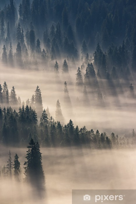 Fototapeta winylowa coniferous forest in foggy mountains - Lasy