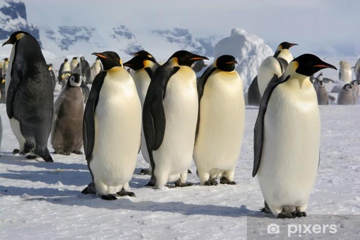 Nálepka Pixerstick Tučňák císařský - Coulmann Island (Antarktida) - Ptáci