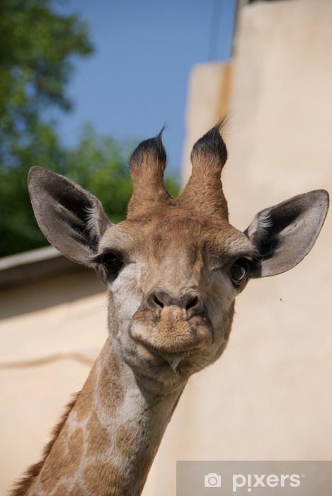 Naklejka Pixerstick Młoda żyrafa - Tematy