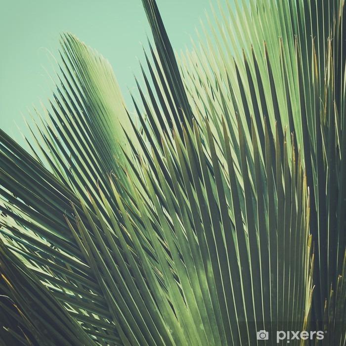 Naklejka Pixerstick Abstrakcyjna tropikalnych tła archiwalne. Liści palmowych w słońcu. - Rośliny i kwiaty