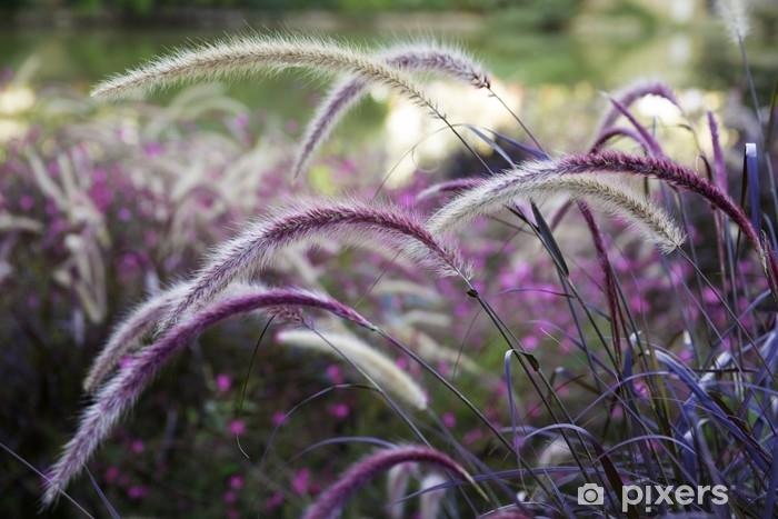 Fototapeta zmywalna Dzika trawa setaria kołyszące się na wietrze z pięknym tle przyrody - Rośliny i kwiaty