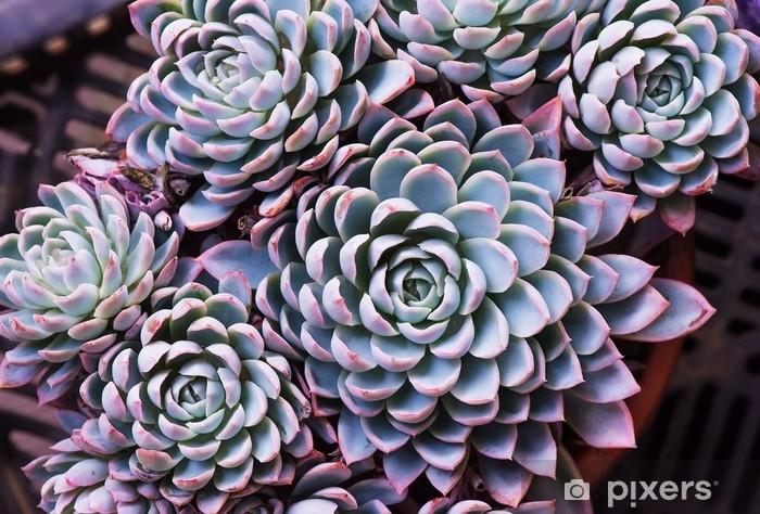 Fototapeta winylowa Miniaturowe soczyste rośliny - Rośliny i kwiaty