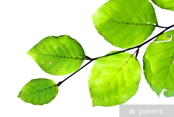 Fototapeta winylowa Oddziałów i zielone liście - dekoracja corner - Ekologia
