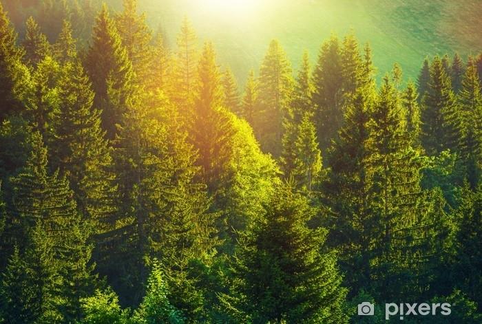 Tvättbar Fototapet Sommar i alpin skog - Växter & blommor