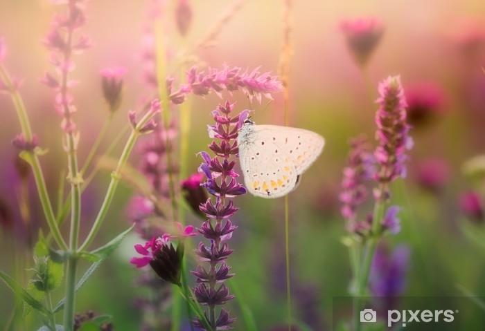 Sticker Pixerstick Papillon sur la fleur sauvage - Animaux