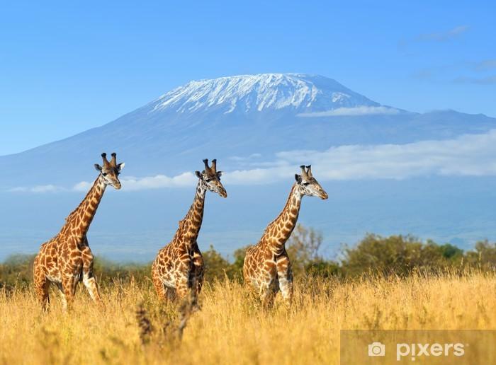 Papier peint vinyle Girafe dans le parc national du Kenya - Thèmes