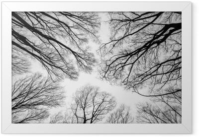Branch of dead tree Framed Poster