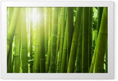Bamboo forest. Framed Poster