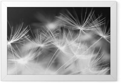 Macro beauty dandelion Framed Poster